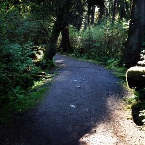 Roche Trail