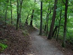 trail in the trees